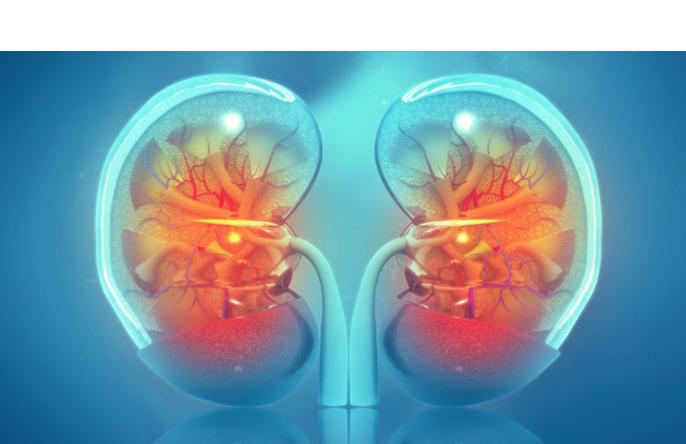 Rak nerki, objawy raka nerki, leczenie nowotworu nerki Nefrektomia